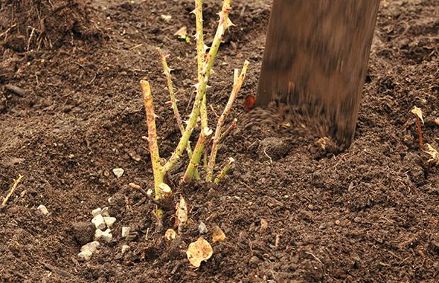◆4月下旬:芽出し肥