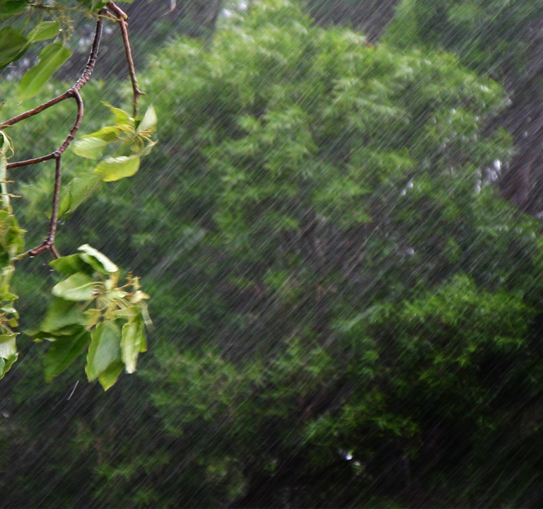 バイオゴールドは植物を異常気象から守ります。