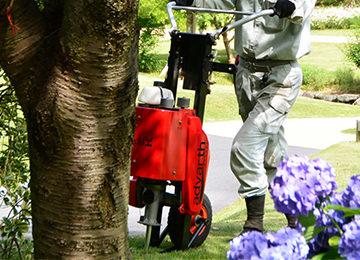 弱った桜の樹勢回復・土壌改良