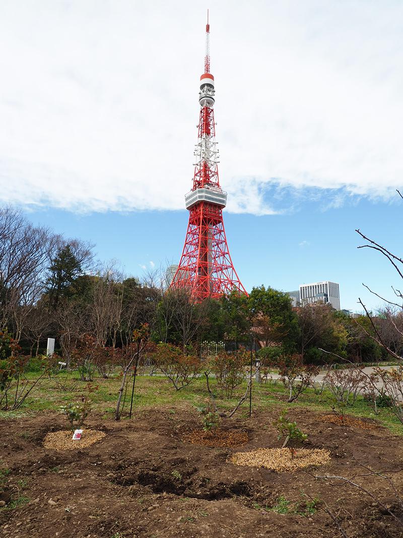 パークタワー東京・土壌改良