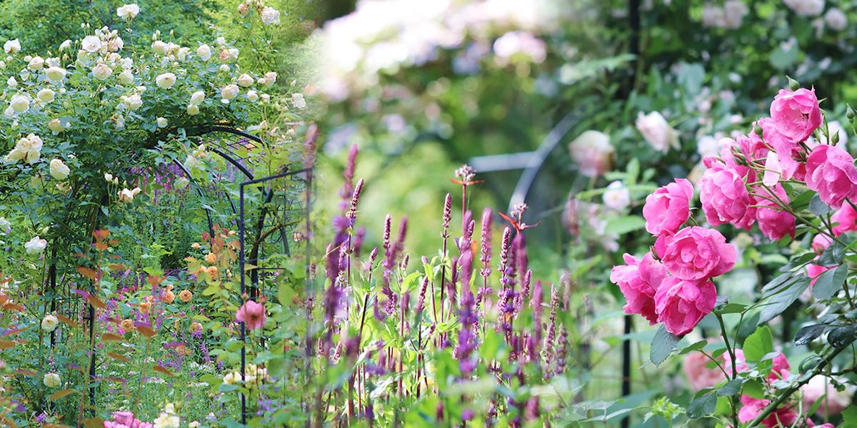 hannahula_garden