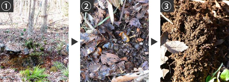 広葉樹林で土ができるプロセス:枯葉・腐葉土・腐植土