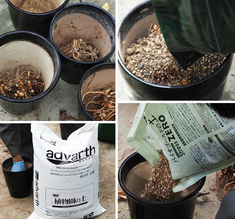 はままつフラワーパークブラックアイリス球根の植え込みにバイオゴールドの土