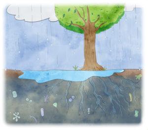 排水がスムーズにできない土壌では、植物は元気に育ち続けることができません。