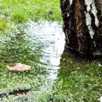 土壌改良成功のために・ガーデナーのための排水基礎知識〜排水が必要な理由から、排水環境の確保の仕方まで〜