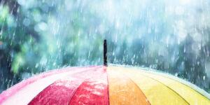 【土壌改良成功のために】ガーデナーが知っておきたい異常気象の影響と対策〜豪雨や酷暑から植物を守るには?