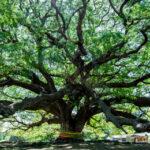 バイオゴールドの歴史は弱った樹木の回復と共に!その歩みはSDGsへとつながる道でした